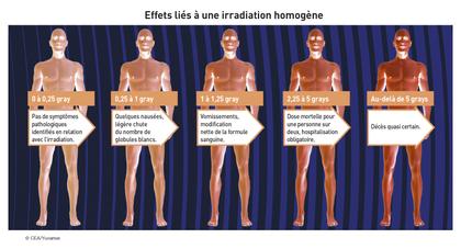 Effets liés à une irradiation homogène - illustration 1