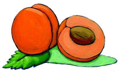L'abricot et son noyau