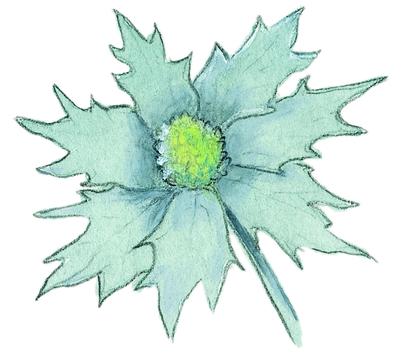 La fleur du chardon