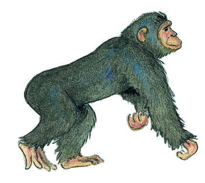 Le chimpanzé