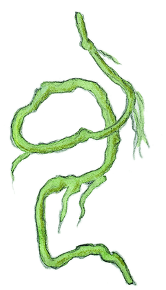 La liane