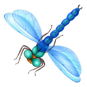 Banque d 39 images sur les animaux ressources pour les - Photo de libellule a imprimer ...