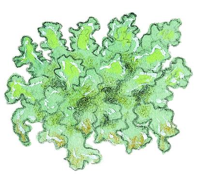 Le lichen