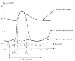 Fonctionnement du coeur et régulation de l'activité cardiaque - illustration 2