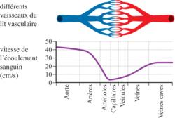 Vitesse moyenne du sang dans différents vaisseaux sanguins