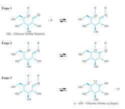 Mécanisme réactionnel de cyclisation du D-Glucose