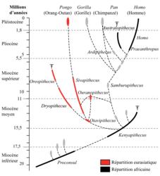 Un regard sur l'évolution de l'homme - illustration 1