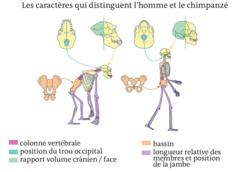 Un regard sur l'évolution de l'homme - illustration 3