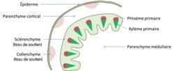 Les relations entre organisation et mode de vie, résultat de l'évolution : l'exemple de la vie fixée chez les plantes - illustration 5