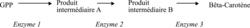 La chaîne de biosynthèse du bêta-carotène