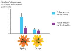 Nombre d'inflorescences recevant du pollen exporté d'une autre inflorescence par les mâles ou femelles de Megapalpus capensis