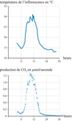 Mesure de la température et de la production de CO2 dans l'inflorescence au cours de la journée