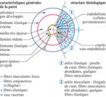 cours de biologie humaine gratuit pdf