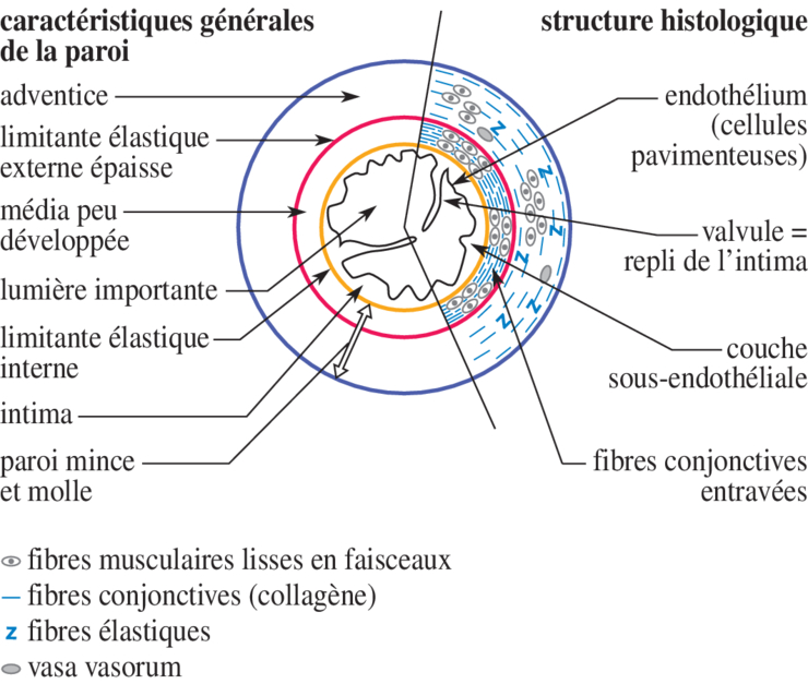 cours biologie terminale s pdf