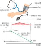 Organisation de l'appareil cardiovasculaire et circulation sanguine - illustration 5