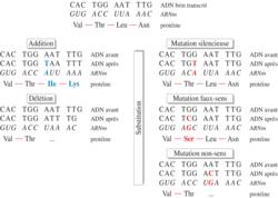 Résumé de différentes mutations ponctuelles et leurs conséquences